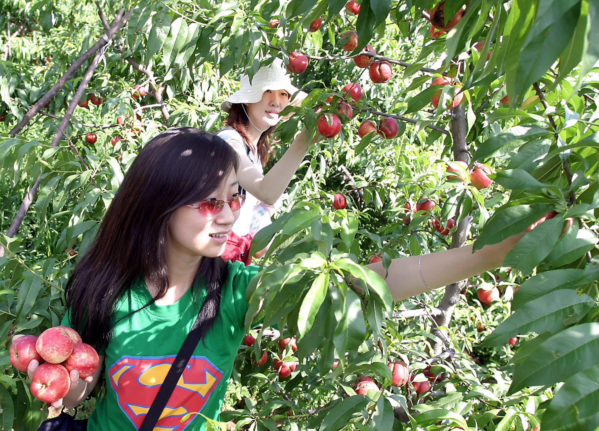 U of Auckland tells international PhD students in New Zealand to 'go fruit picking'
